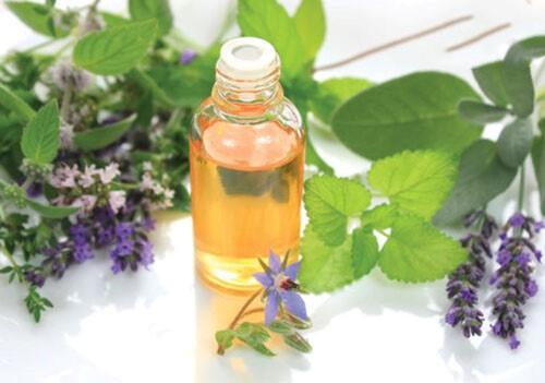 Tinh dầu hương nhu tía