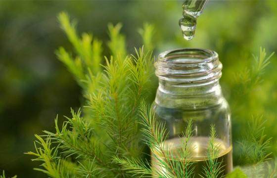 Tinh dầu tràm nguyên chất thiên nhiên và lành tính tuyệt đối