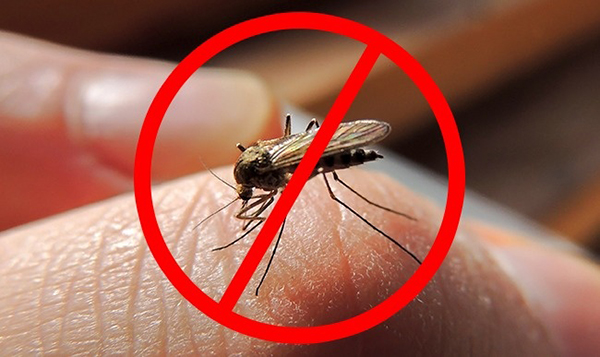 Tinh dầu sả chanhxua đuổi muỗi, côn trùng