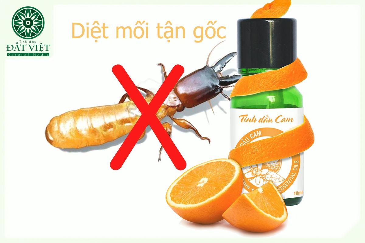Tinh dầu cam diệt mối - Giải phápan toàn thay thế hóa chất độc hại